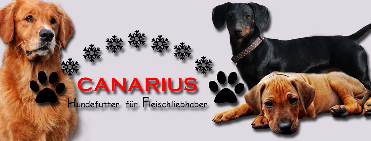 Canarius-Logo